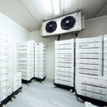 Cost Containment Strategies from the Cold Storage Experts at FW Warehousing