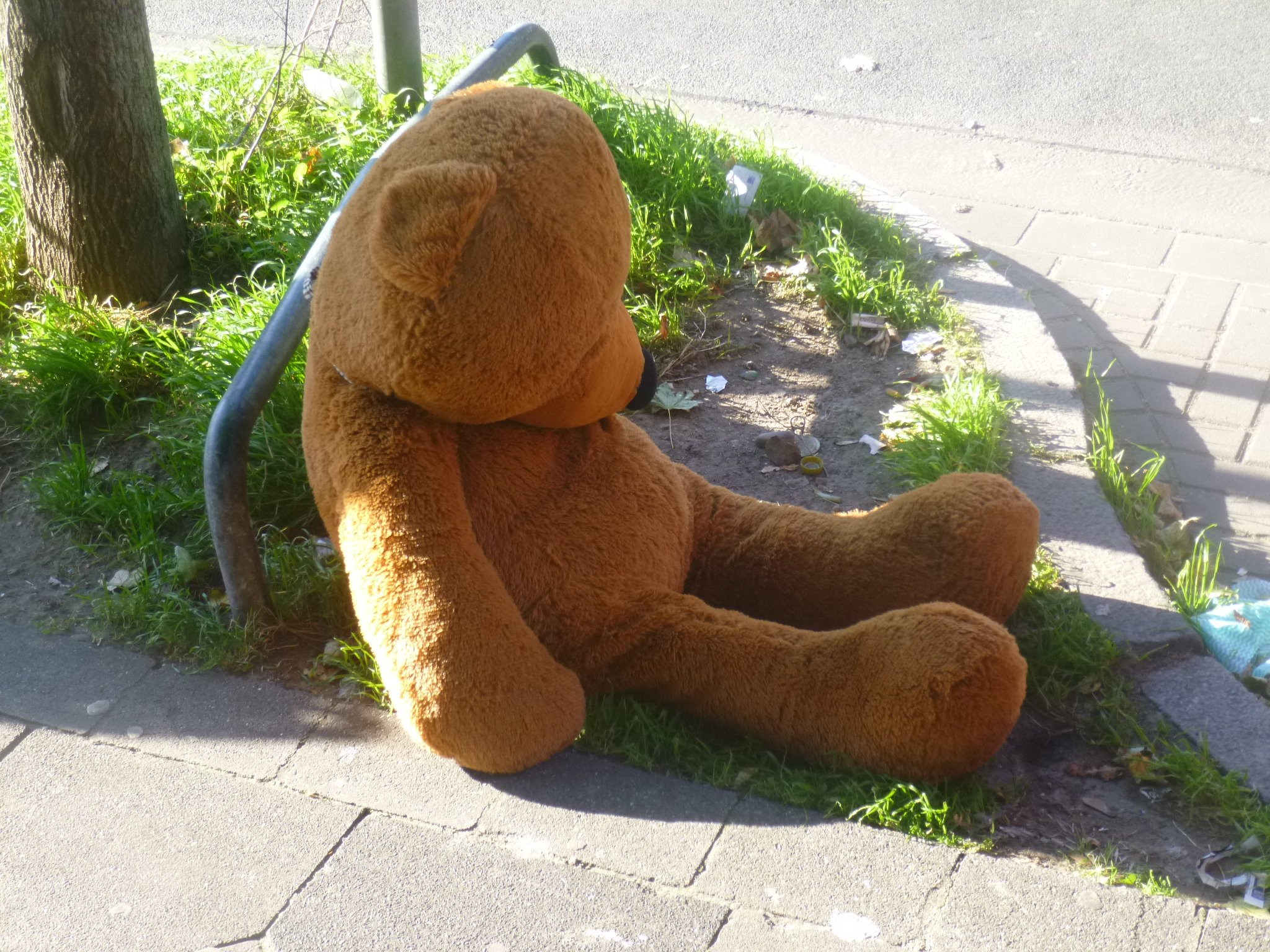 Teddy auf Strasse